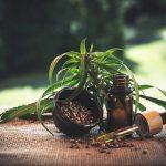 Les essentiels à savoir sur l'huile de CBD