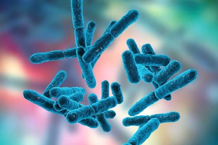 Quel est l'intérêt des probiotiques pour votre santé ?