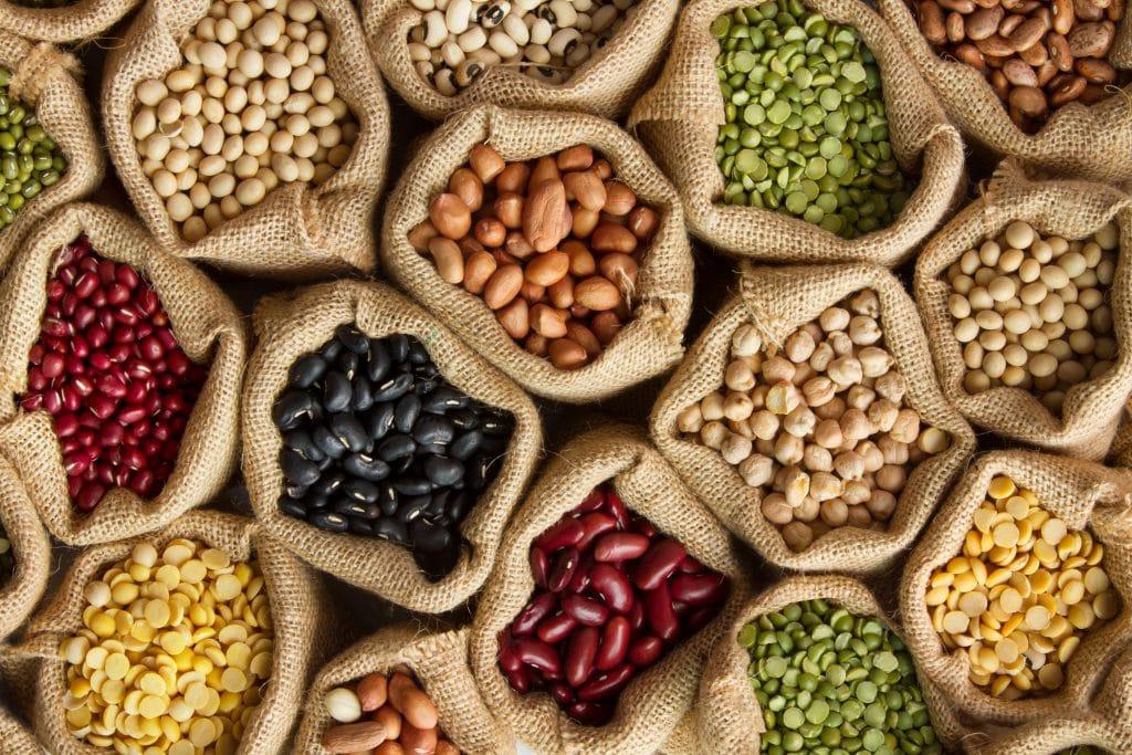 Qu'est-ce qu'une protéine végétale ?