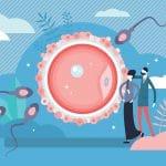 Qu'est-ce qu'un ovocyte ?